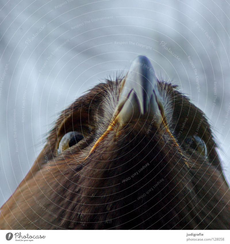 Nature Beautiful Eyes Animal Colour Life Above Bird Environment Feather Longing Beak Pride Eagle Bird of prey Ornithology