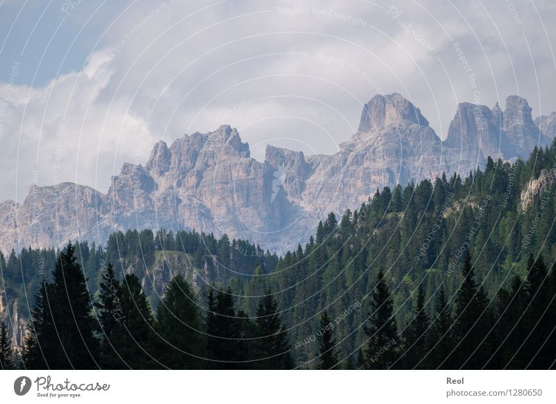 Light Dark Graduation Environment Nature Landscape Elements Earth Sky Clouds Summer Beautiful weather Tree Coniferous forest Forest Rock Alps Mountain Dolomites