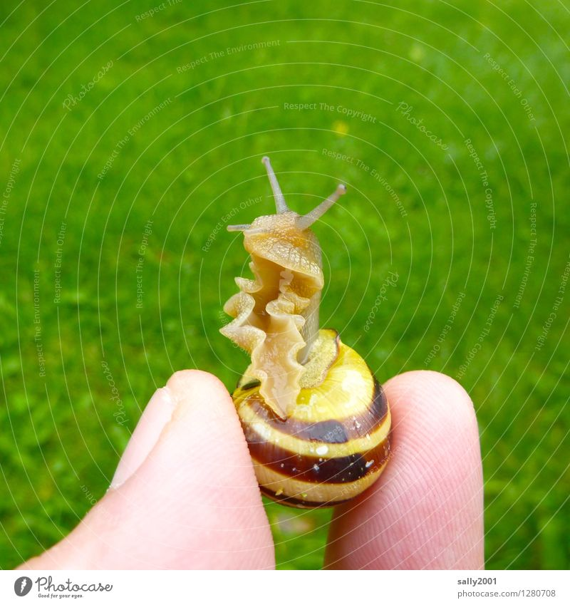 frilly snail... Fingers Grass Garden Park Meadow Animal Snail Garden snail Snail shell 1 Observe Touch Disgust Beautiful Cold Small Curiosity Slimy Green
