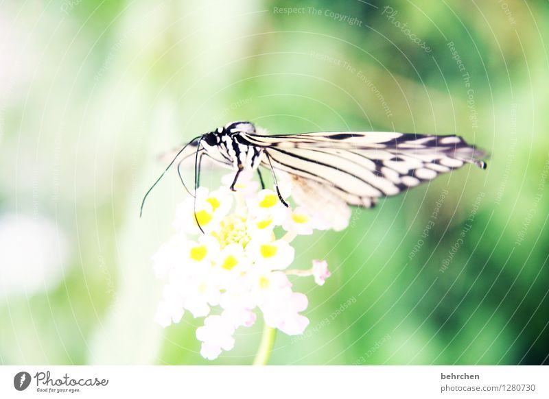 Delicate Nature Plant Animal Flower Leaf Blossom Garden Park Meadow Wild animal Butterfly Animal face Wing White tree nymph Legs Feeler 1 Observe Relaxation