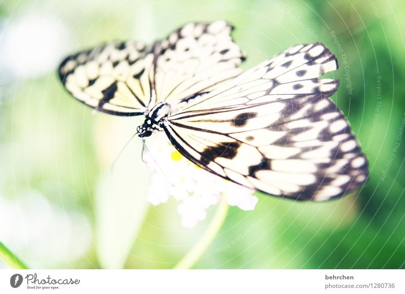 mandatory Nature Plant Animal Spring Summer Beautiful weather Flower Leaf Blossom Garden Park Meadow Wild animal Butterfly Wing 1 Observe Blossoming Relaxation