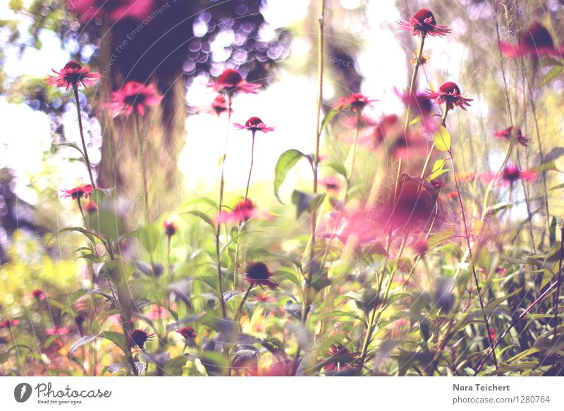 Nature Plant Beautiful Summer Flower Leaf Environment Spring Blossom Emotions Meadow Grass Garden Pink Park Design