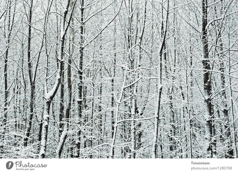 Nature White Winter Forest Black Cold Environment Emotions Natural Snow Gray Esthetic Bleak