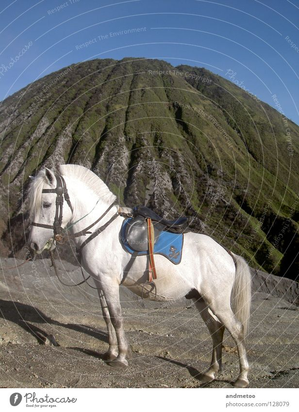 Nature White Blue Animal Mountain Stone Landscape Transport Horse Mammal Bangs Blue sky Pony Volcano Italy Promontory