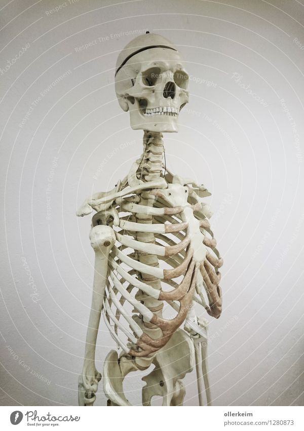 skeleton, bone, skull, skeleton Health care School Study Academic studies Doctor Body Head Chest Illness White Death Skeleton Death's head Ribs Anatomy