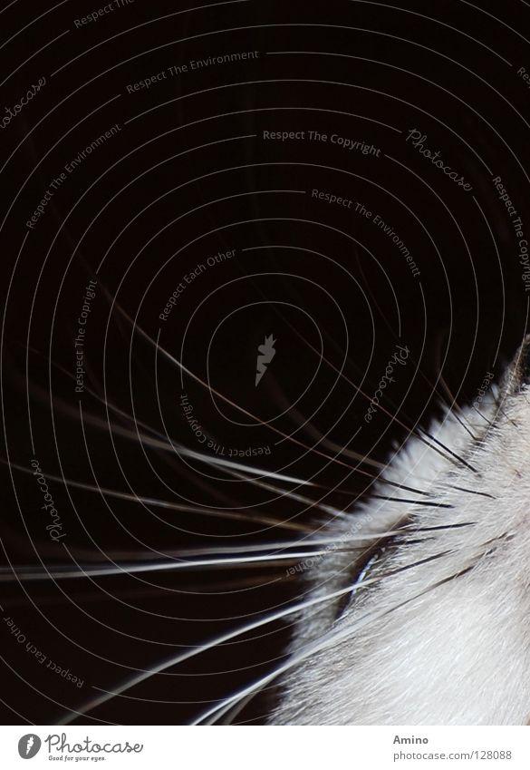 Cat Nature White Animal Calm Black Playing Gray Dream Line Elegant Sleep Pelt Catch Mammal Noble