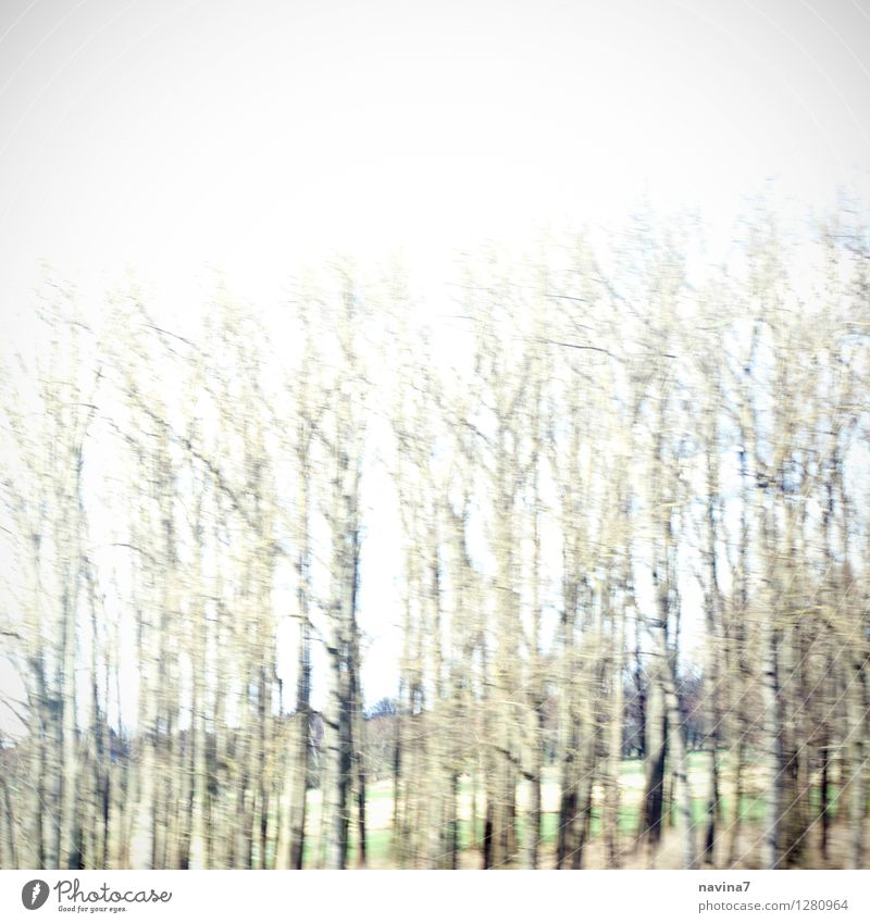 birch forest Environment Nature Landscape Summer Climate Tree Forest Movement Environmental protection Birch tree Birch wood Speed Transience Time Loneliness