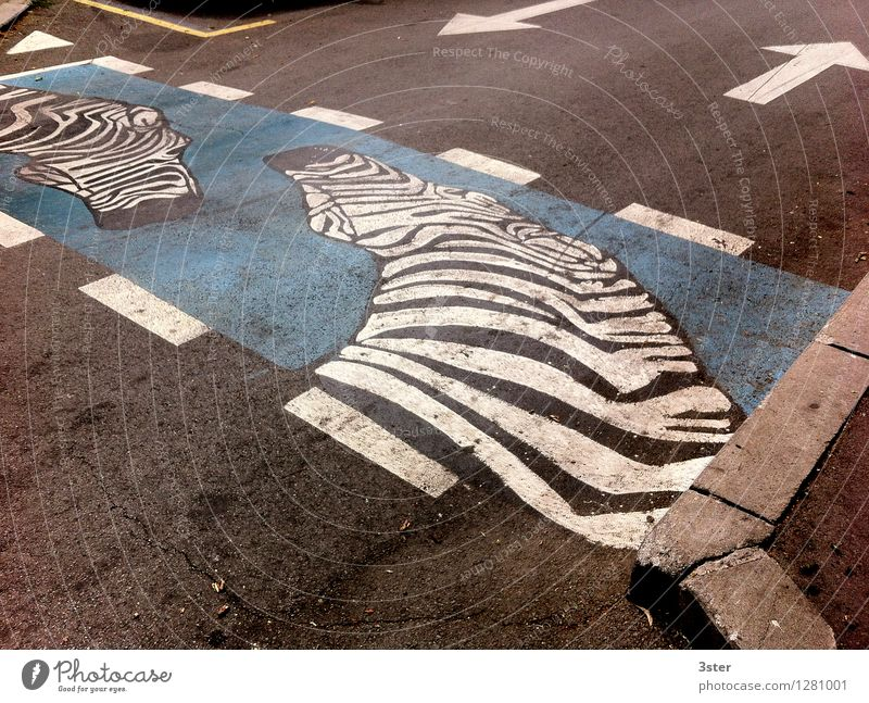 Zebra on the Strip II Road traffic Street Animal Zoo Safety Zebra crossing Transport Colour photo Exterior shot Detail Deserted Copy Space top Copy Space bottom