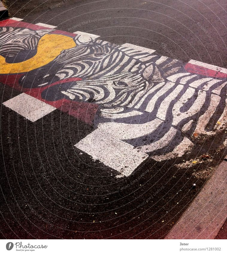 Zebra on the Strip III Traffic infrastructure Road traffic Animal Zoo Safety Zebra crossing Transport Street Colour photo Exterior shot Deserted Copy Space top
