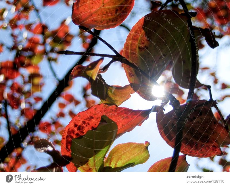 Nature Green Tree Red Sun Summer Leaf Calm Relaxation Graffiti Autumn Above Wind Bushes Branch Twig