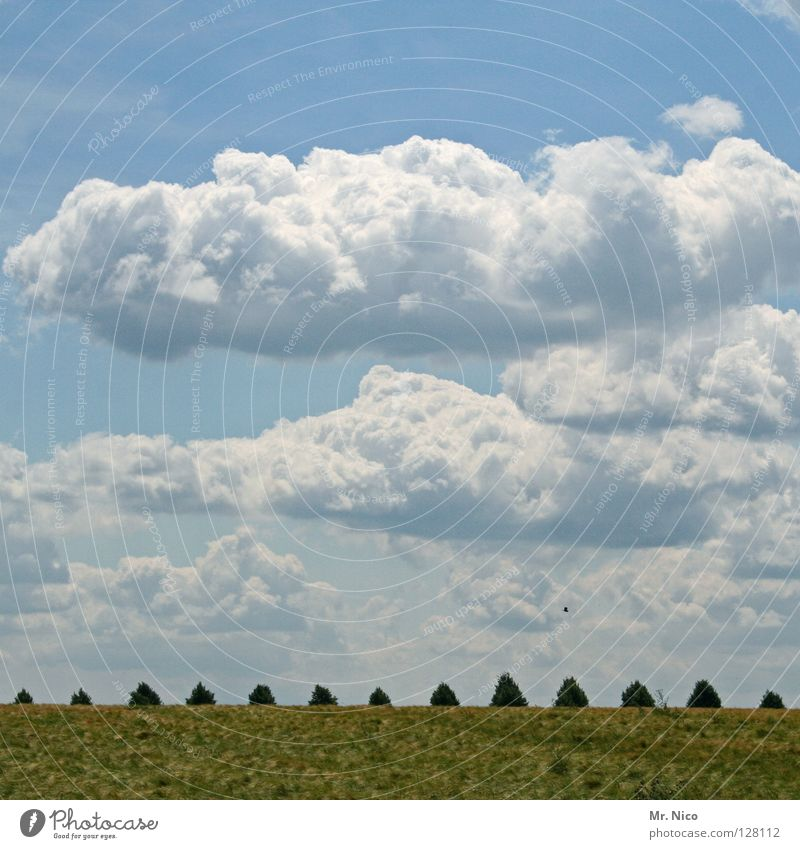 Sky White Tree Green Blue Clouds Meadow Freedom Landscape Bird Flying Free Lawn Point Row Tuscany
