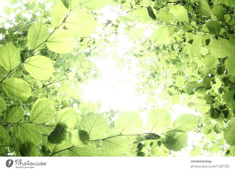 Tree Sun Green Summer Calm Leaf Forest Spring Lighting Fresh Stress Harmonious Bud Vista Crunchy Comforting