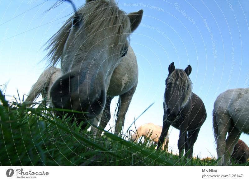 Sky Blue Green Animal Meadow Grass Hair and hairstyles Legs Brown Wind Crazy Perspective Curiosity Lawn Near Horse