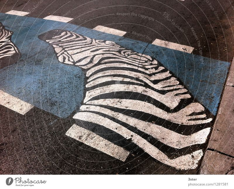 Zebra on the Strip I Town Traffic infrastructure Road traffic Wild animal Zoo Safety Zebra crossing Street Transport Colour photo Exterior shot Detail Deserted