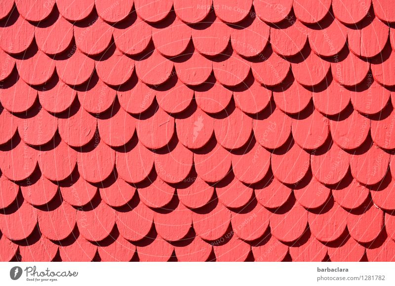 monotonous | shingle to shingle House (Residential Structure) Building Wall (barrier) Wall (building) Facade Roofing tile Wood Ornament Row Red Design Colour