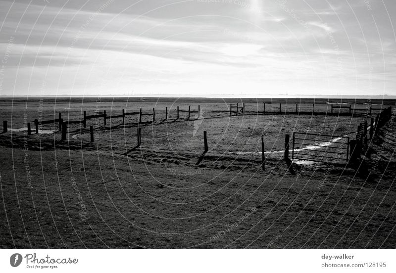The man from Kentucky Field Fence Fold Pasture Meadow Puddle Reflection Horizon Clouds Steppe Ranch Light Dark Cowboy To feed Barrier Black & white photo Sky
