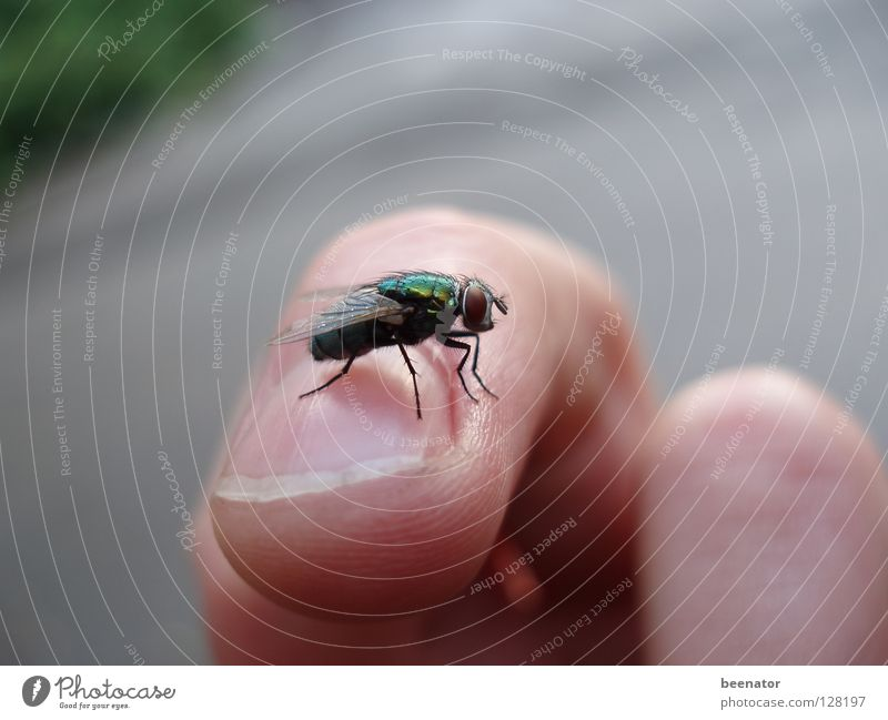 Beautiful Summer Calm Contentment Skin Glittering Fly Fingers Insect Fingernail Tiny hair