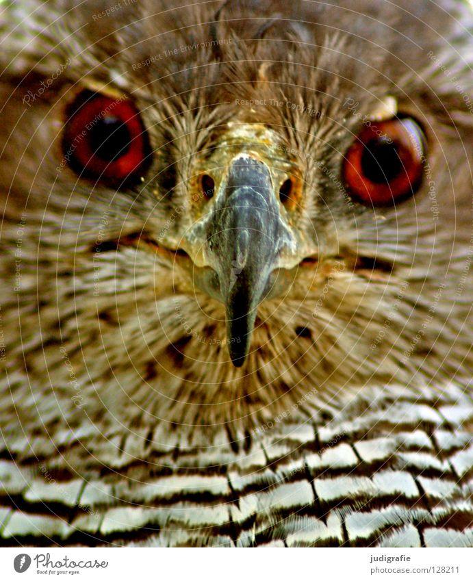 Nature White Black Eyes Animal Yellow Colour Brown Bird Environment Feather Stripe Wild animal Beak Bird of prey Hawk