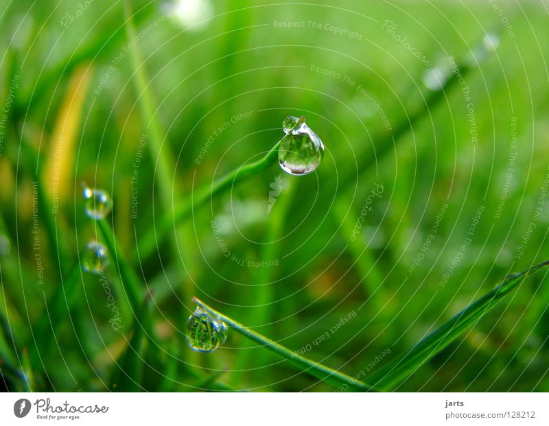 Water Green Meadow Grass Spring Rain Drops of water Wet Cry