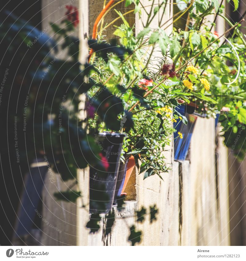 0815 AST   cleaned up Plant Flower Pot plant Bamberg Window board Flowerpot Blossoming Growth Positive Multicoloured Optimism Lush Exterior shot Deserted