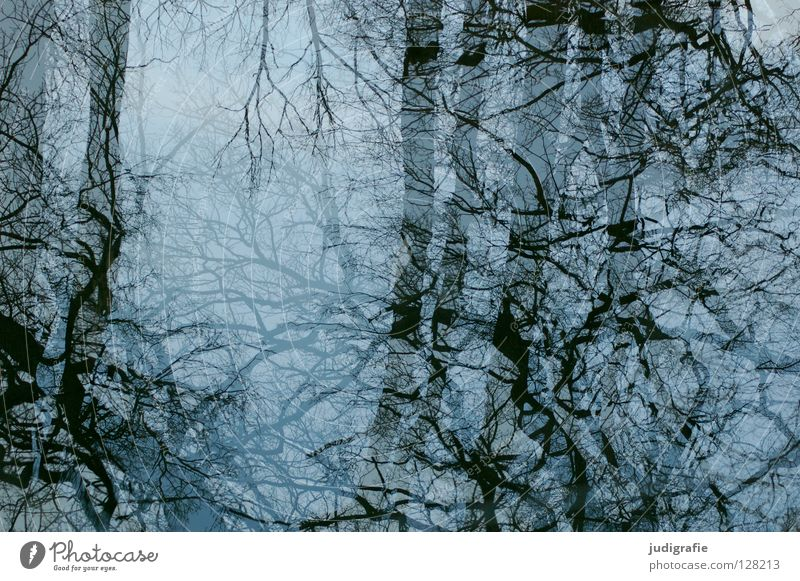 Mirrored Tree Reflection Branchage Winter Cold Treetop Muddled Colour Water Glass Blue Sky