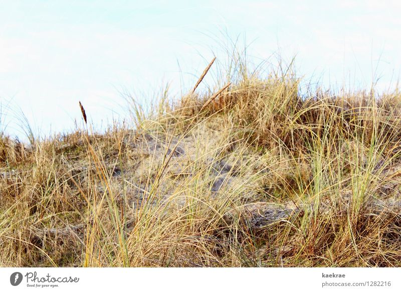 yellow on the beach Vacation & Travel Beach Island Environment Landscape Plant Sand Sky Grass Hill North Sea Baltic Sea Blue Brown Yellow Gold Movement Freedom