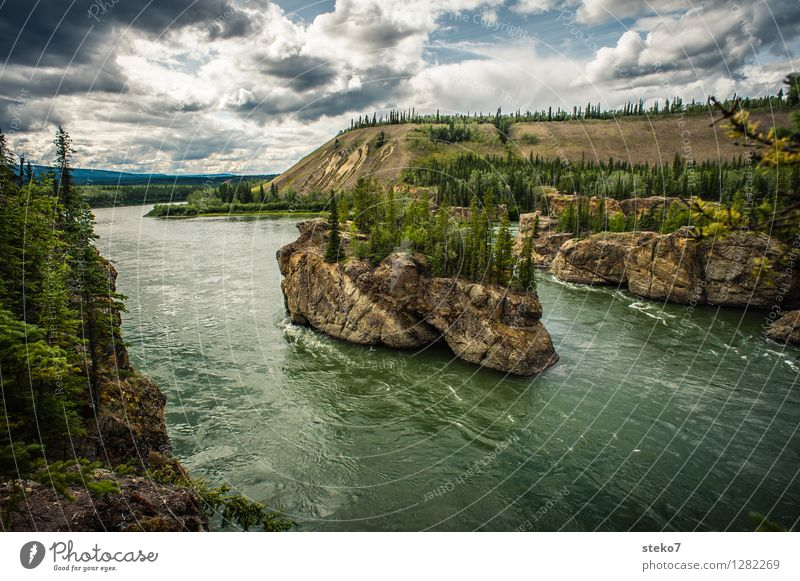 Yukon Forest Rock River bank Yukon River Rapid Movement Loneliness Threat Far-off places Exterior shot Panorama (View)