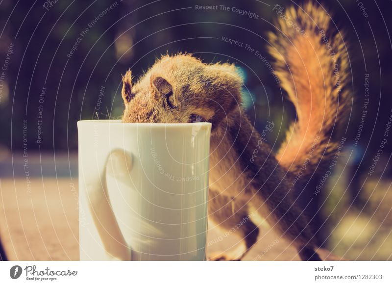 Animal Curiosity Search Cup Camping Brash Squirrel Thief