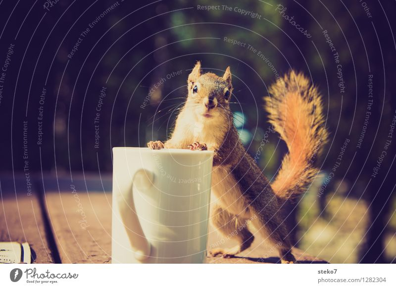 Animal Observe Curiosity Discover Cup Camping Brash Disappointment Squirrel To have a coffee Coffee break