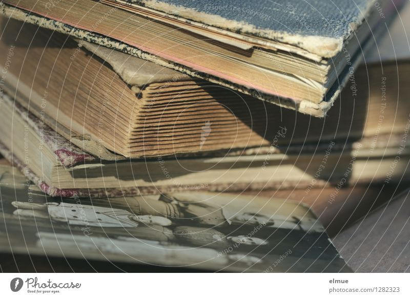 what remains Book Photo album Photography Paper Diary Old Historic Original Brown Sadness Grief Pain Longing Lose Eternity Infancy War Divide Past Transience
