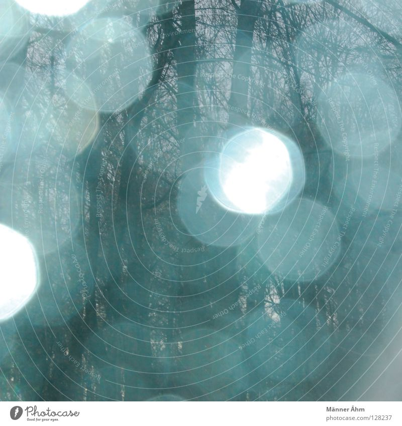Sky Blue Water Tree Clouds Playing Rain Door Glass Glittering Fog Drops of water Star (Symbol) Future Grief Past