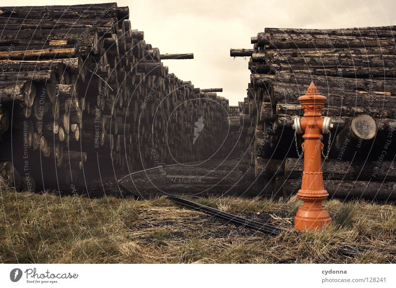Nature Water Tree Red Death Meadow Mountain Lanes & trails Exceptional Multiple Many Logistics Tree trunk Barrier Surrealism Stack