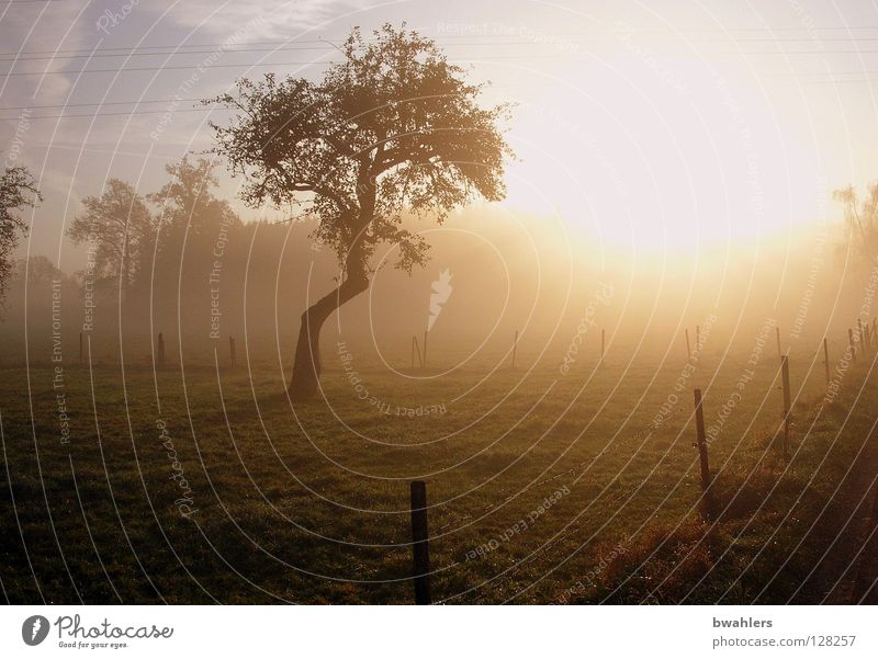 Morning mood 1 Fog Tree Fence Meadow Forest Light Moody Autumn Back-light Sun Lighting Sky Landscape