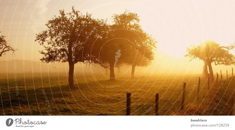 Morning mood 2 Fog Meadow Tree Fence Back-light Moody Light Autumn Sun Landscape Lighting Sky Shadow