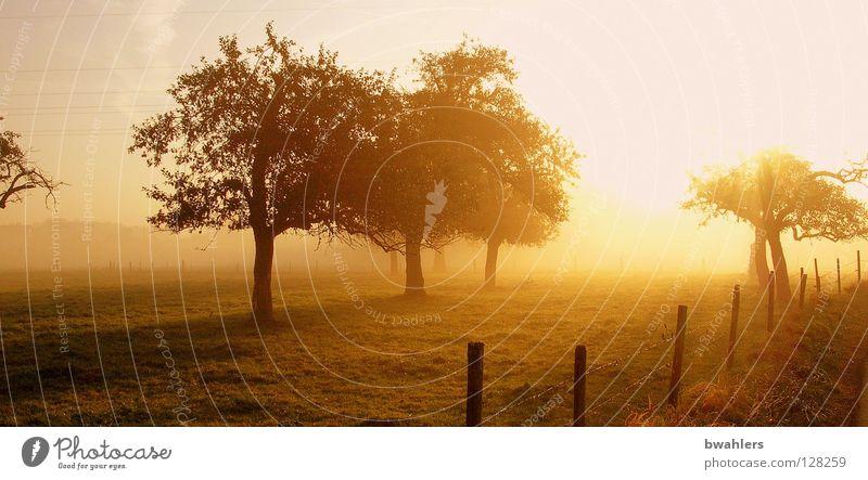 Sky Tree Sun Autumn Meadow Landscape Moody Lighting Fog Fence Back-light Plant