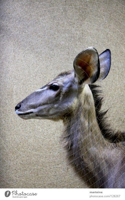 Animal Large Wild animal Ear Zoo Listening Mammal Portrait format