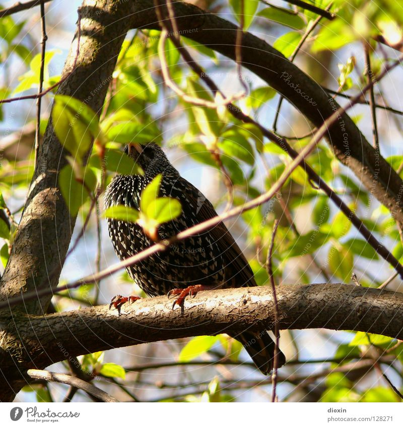 Green Tree Leaf Spring Bird Search Bushes Feather Wing Branch Mysterious Watchfulness Bud Find Timidity Crouch