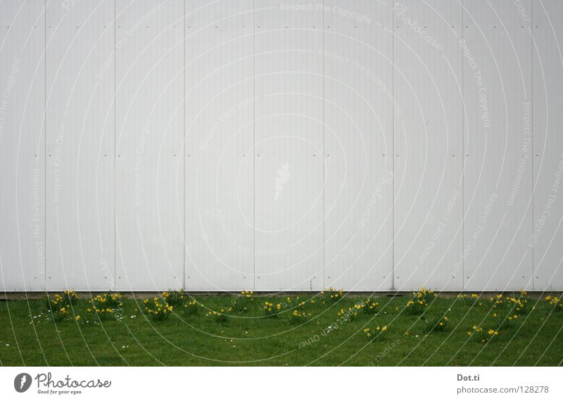 White Flower Green Plant Meadow Wall (building) Grass Spring Park Building Line Facade Empty Places Gloomy Lawn