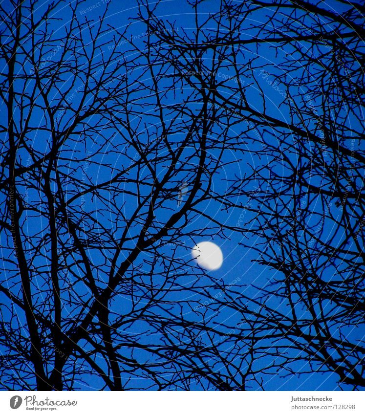 entanglement Tree Black Night Celestial bodies and the universe Night sky Backwards Romance Beautiful Moon Blue Branch Mysterious entangled Sky Universe