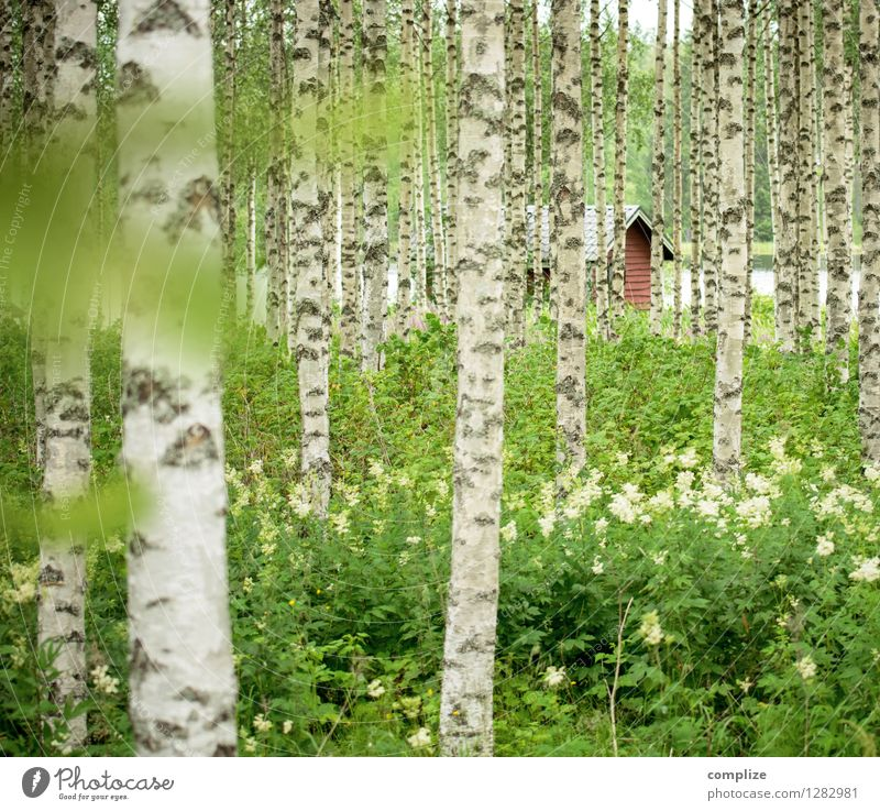 Hidden in the birch forest Relaxation Calm Spa Vacation & Travel Tourism Freedom Summer Summer vacation Beach Living or residing Climate Plant Tree