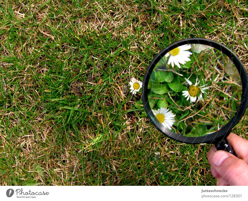 I see spring already Magnifying glass Enlarged Flower Daisy Grass Spring Large Small Plant Growth Grown Green White Yellow Cute Success Garden Juttas snail