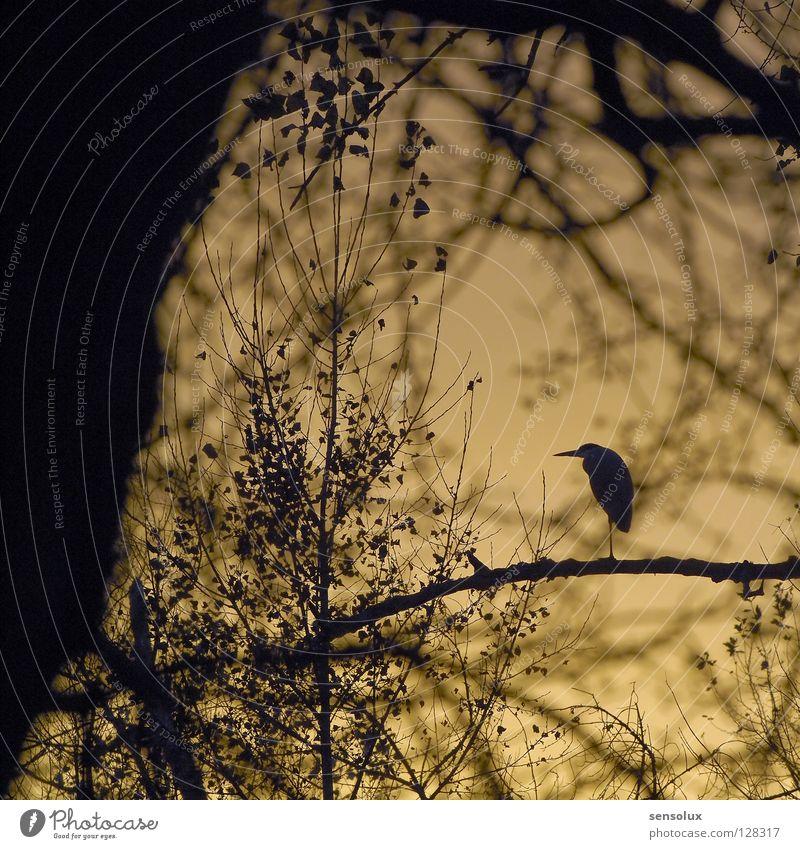 Nature Sky Forest Bird Branch Hide Dusk Environmental protection Crane Undergrowth Evening sun Heron