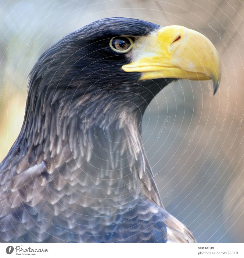 Eagle Eye be watchful Bird of prey Watchfulness Beak Beautiful Pride Observe Caution Nature Looking visual acuity Eyes