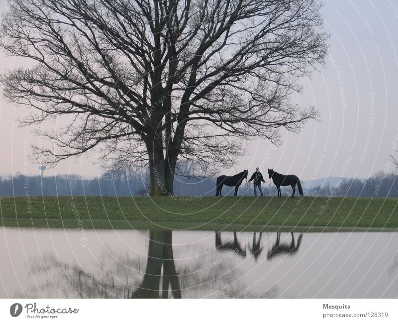 Human being Man Nature Water Tree Black Adults Autumn Meadow Landscape Spring Lake Wet Stand Horse To go for a walk