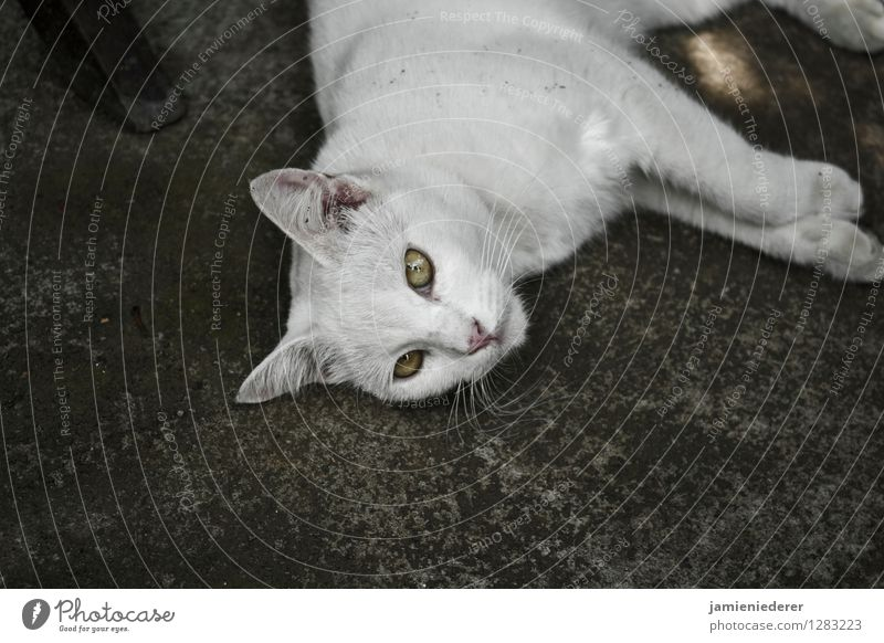 Stray White Cat Animal Cool (slang) Serene Self-confident Patient Love of animals