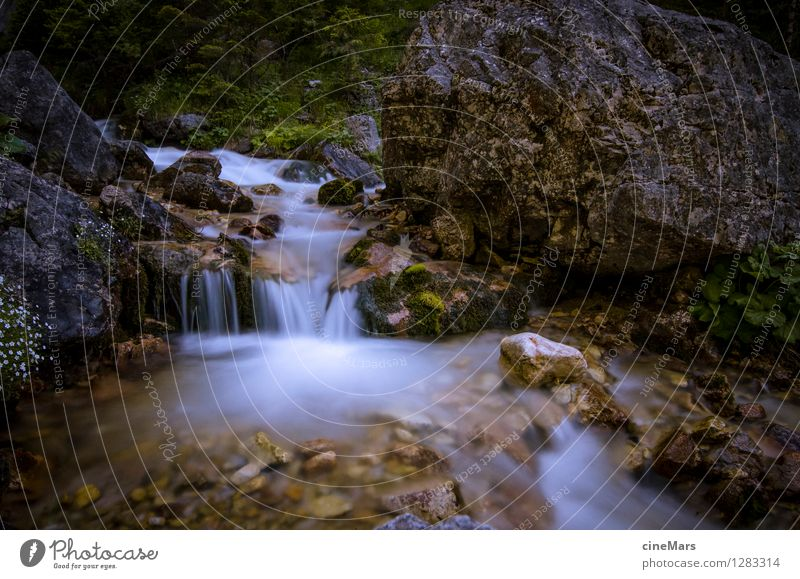 Long time exposure Bergbach Nature Landscape Water Summer Foliage plant Alps Mountain Brook Dream Natural Positive Beautiful Gray Green White Contentment Power