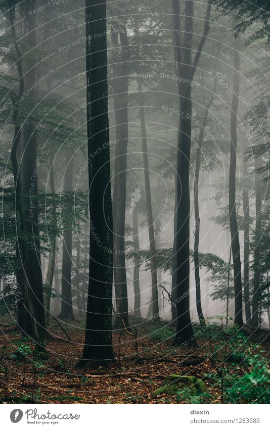 After Rainforest [20] Environment Nature Landscape Plant Climate Bad weather Fog Tree Forest Mountain Palatinate forest Wet Natural Colour photo Subdued colour