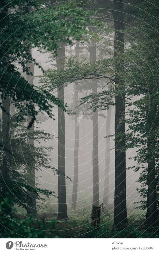 Nature Plant Tree Landscape Forest Cold Environment Autumn Rain Weather Fog Growth Hiking Trip Climate Wet