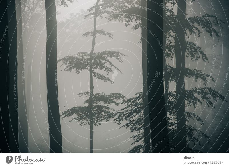 Nature Plant Tree Landscape Forest Environment Autumn Natural Rain Weather Fog Growth Hiking Trip Climate Wet