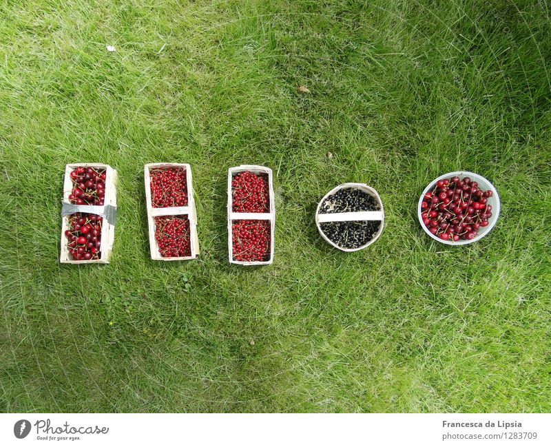 Rich harvest Fruit Redcurrant Cherry Picnic Organic produce Vegetarian diet Basket Healthy Eating Summer Grass Agricultural crop Garden Meadow Fresh Small